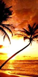 BeachSunset480