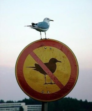 Break the Rules! (photo by Scott Kleinberg) via Flickr Creative Commons
