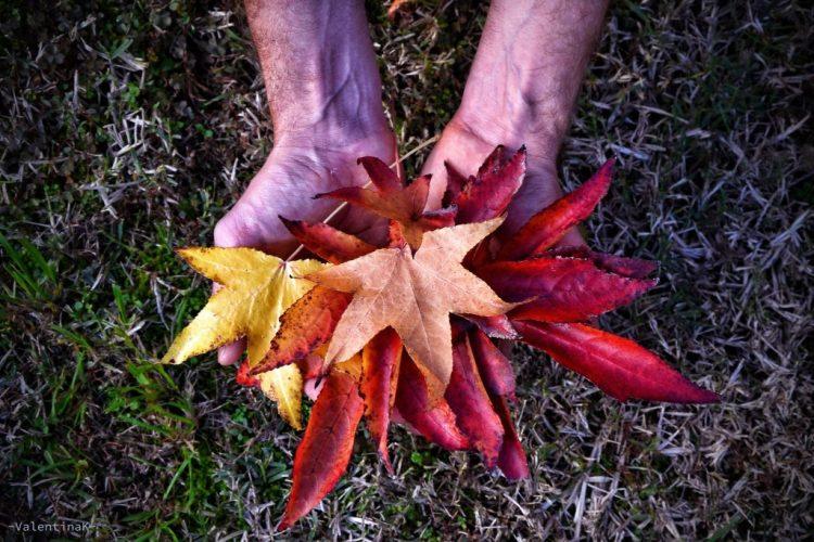 emozioni d'autunno, le foglie rosse e gialle