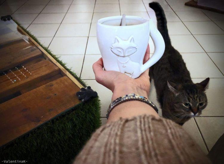 pausa caffè con tazza gattosa e la micia grigia Izzy