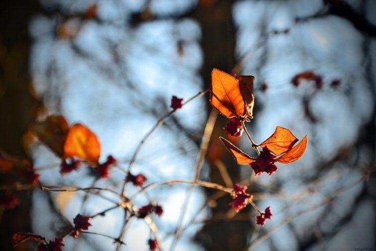giochi di luce e foglie al parco bucci