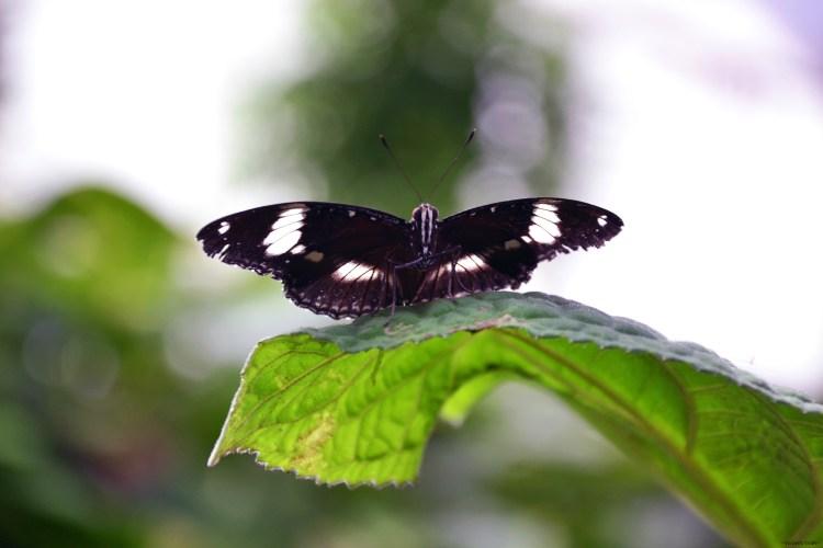 bellissima farfalla in posa su foglia