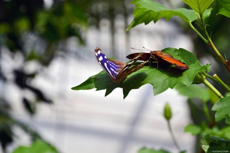due bellissime farfalle colorate alla casa delle farfalle