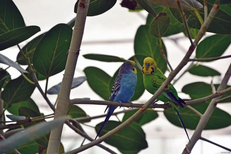 pappagallini colorati, abitanti della serra presso la casa delle farfalle di cervia