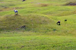 cavalli e prati verdissimi all'alpe di siusi