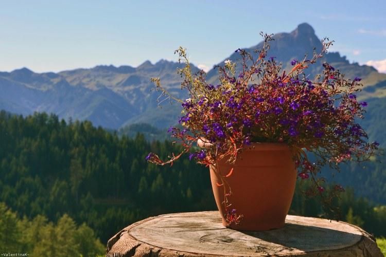 lista di rifugi in Alta Badia: vaso di fiori al ranch de andrè con panorama sul sas de putia