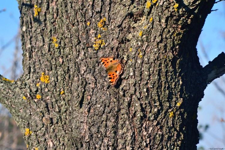 farfalla arancione primaverile su tronco