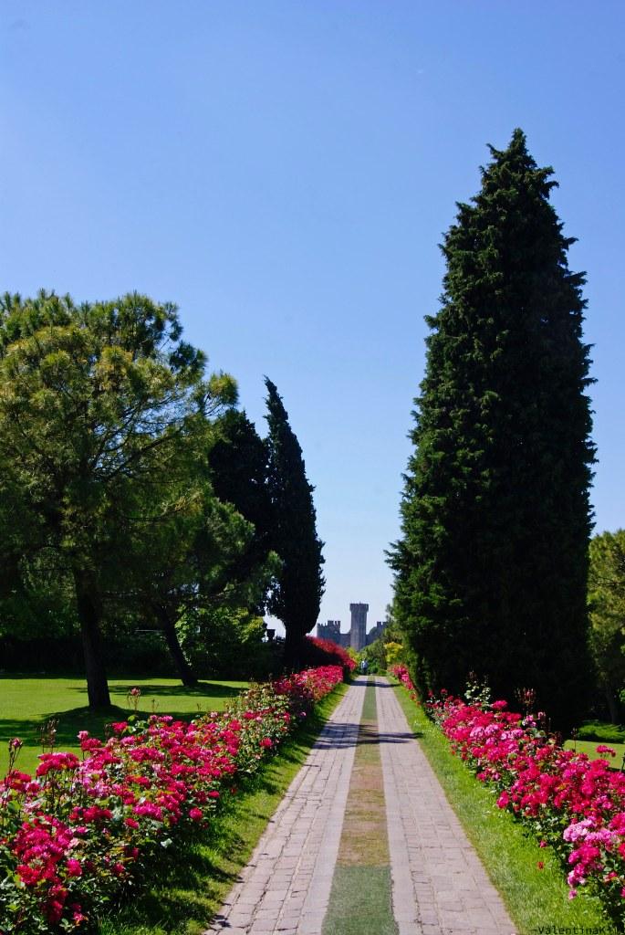 Parco Giardino Sigurtà: il viale delle rose con le rose e la torre scaligera