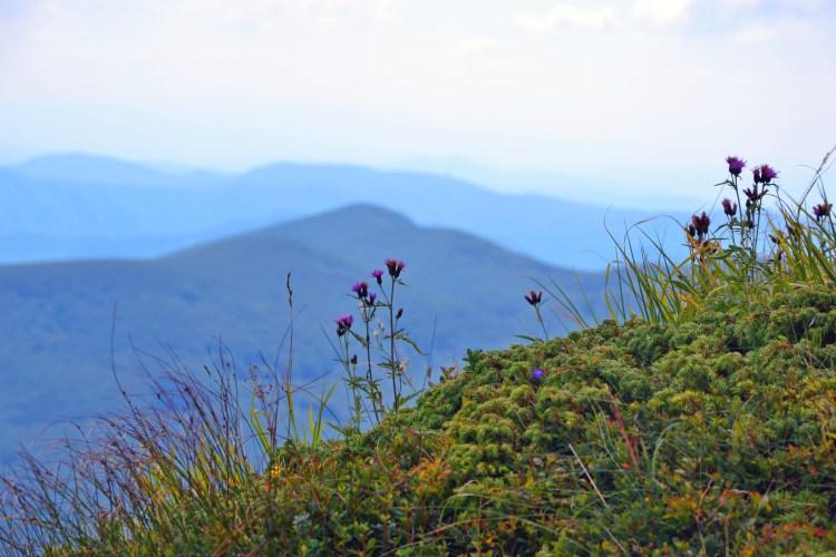 corno alle scale e lago scaffaiolo: vegetazione appenninica e cime in sottofondo