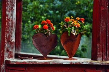 Settembre e nuovi inizi: fiori settembrini