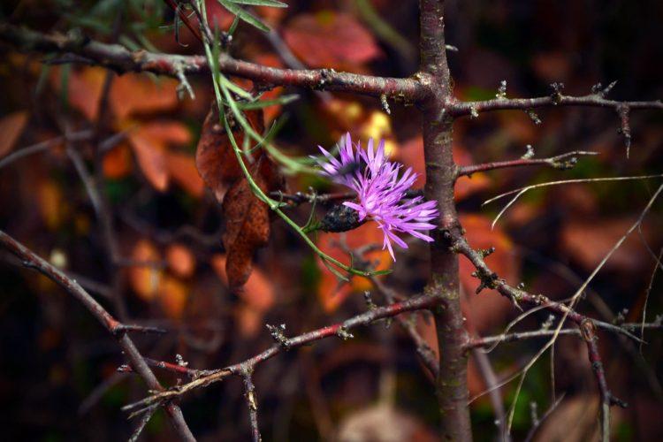 102 articoli sul blog: fiore rosa su colori d'autunno