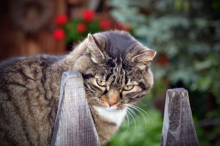 102 articoli sul blog: gatto leonardo sembra sconvolto