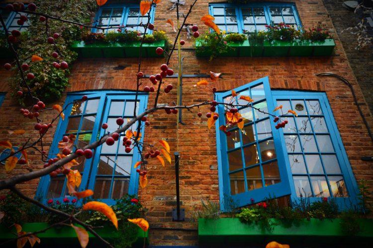 finestre colorate e alberelli presso il neal's yard