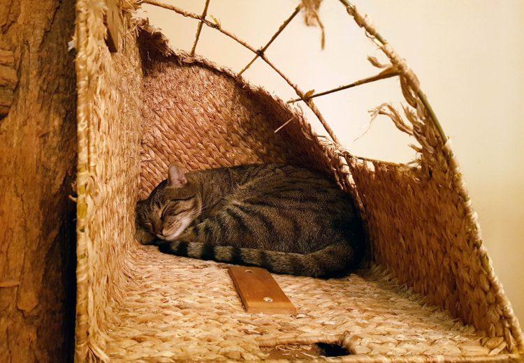 Caffetterie e pasticcerie a Budapest: gatto tigrato che dorme pacifico
