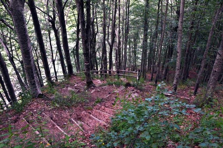 Sentiero in mezzo al bosco, verso le cascate del dardagna