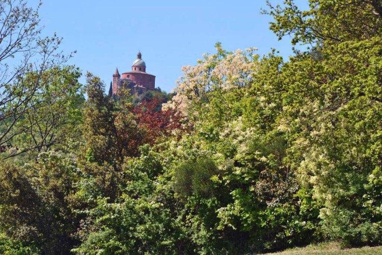 il santuario di san luca che appare tra gli alberi verdi