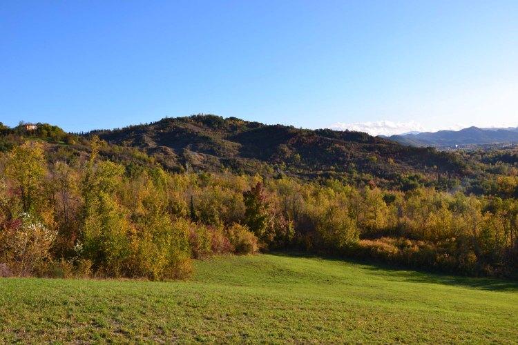 Alla scoperta del Parco Talon: scorci di prato e bosco