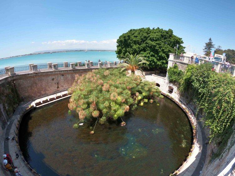 la fonte aretusa, uno dei luoghi imperdibili da visitare sull'isola di ortigia