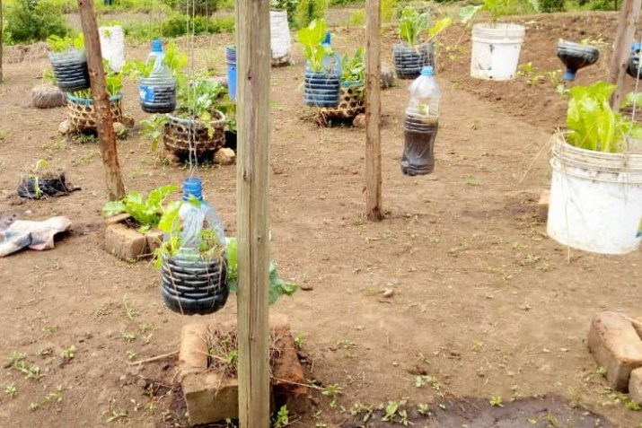 Sprouting vegetables in organic demo garden