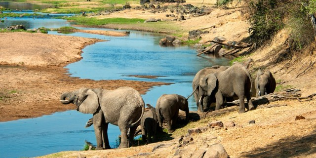 8 Day Safari in Lake Eyasi, Serengeti and Ngorongoro Crater