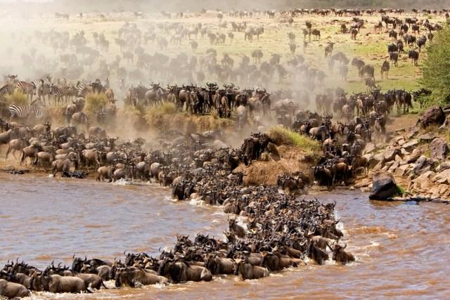 9 Days Mara River Clossing Safari