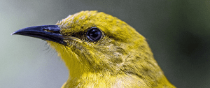 Victimless Canary Testing with Scientist