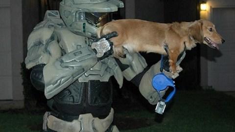 masterchiefdogdfs