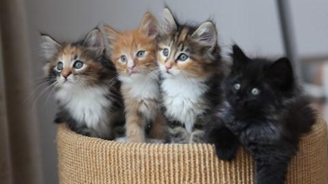 kill_screen_kickstarter_kittens_1