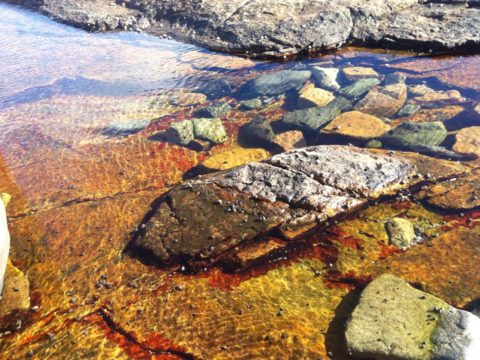 Tidepool on a sunny day.