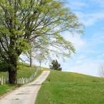 Camino primavera - Kilometrosquecuentan