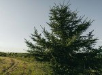 Lucas County Iowa Land For Sale (104)