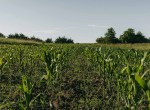 Lucas County Iowa Land For Sale (87)
