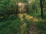 Land for Sale Decatur County Iowa-20