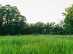 Land for Sale Decatur County Iowa-29