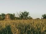 Land for Sale Decatur County Iowa-42
