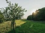Land for Sale Decatur County Iowa-6