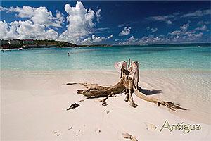 Long bay Antigua Postcard