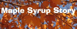 A Maple Syrup Story