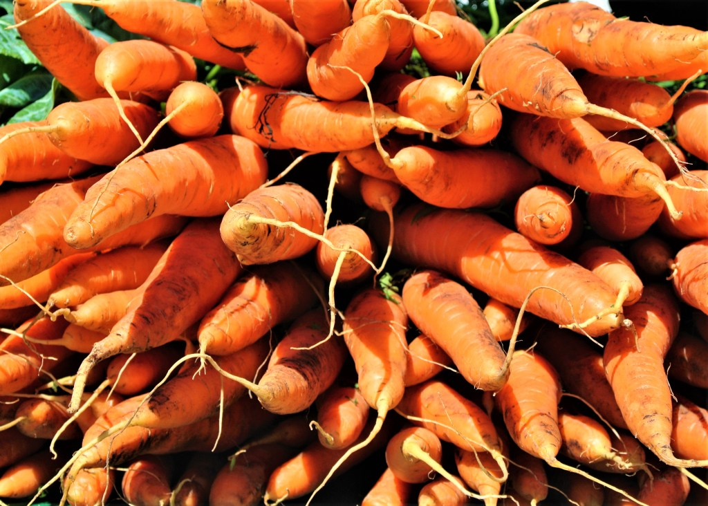 Carrots on display at St. Jacobs Farmers Market