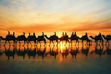 Camels stroll along Cable Beach at sunset