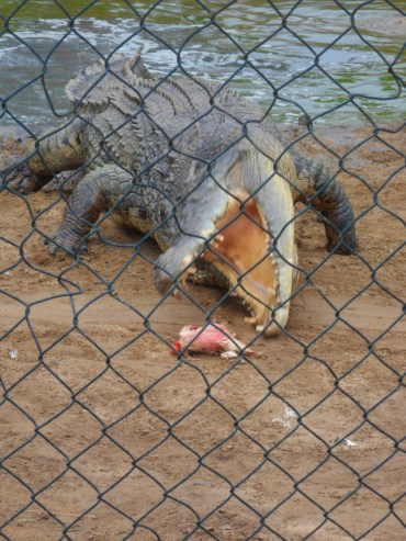 Koorana Crocodile Farm