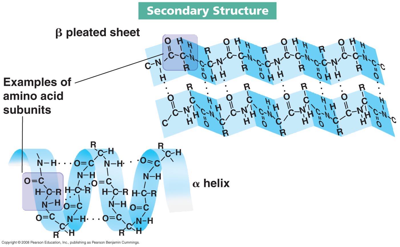 Amino Acids and Proteins  Biochem Rocks