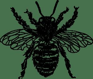bee drawing