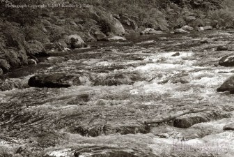 river, bristol, new hampshire, landscape, outdoors, nature, plants, summer, Kimberly J Tilley