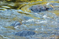 river, water, summer, rocks, movement, Kimberly J Tilley