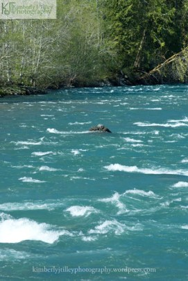 a view of the Elwha River in Washington