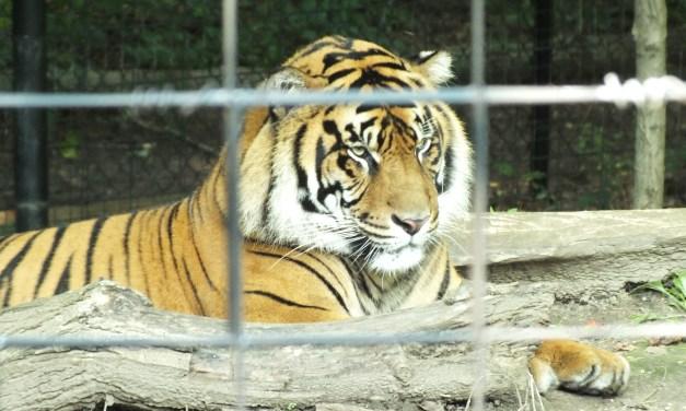 US Finally Taming the Tiger Trade