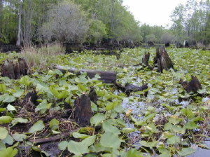 Swamp, marsh or bog?