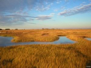 Tidal Marshland in the Plum Island Estuary, MA (Matthew Kirwan , USGS )
