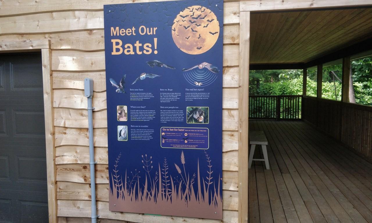 MEET OUR BATS